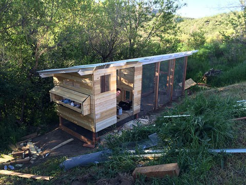 Chicken coop construction-with tongue and groove siding
